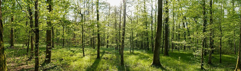 Woodland for Tiny House