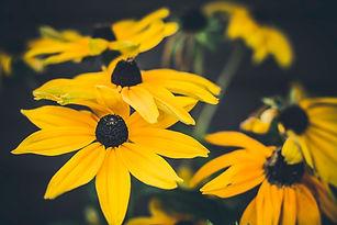 Colorado Plant Select® & Xeriscape Demonstration Gardens