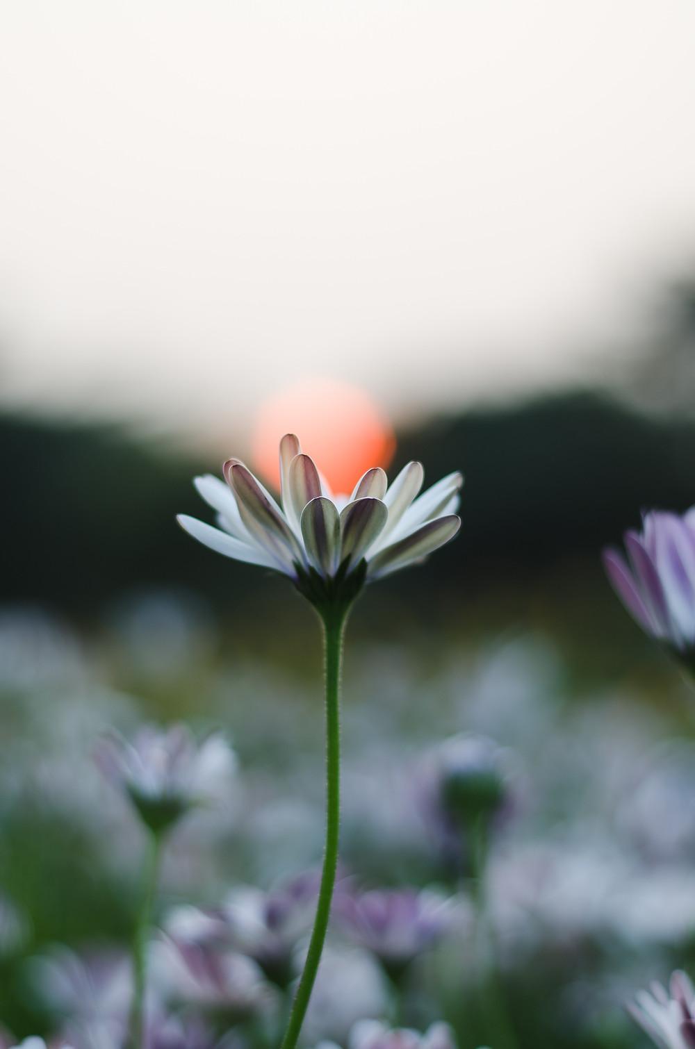 Blume | Kinder und Grenzen