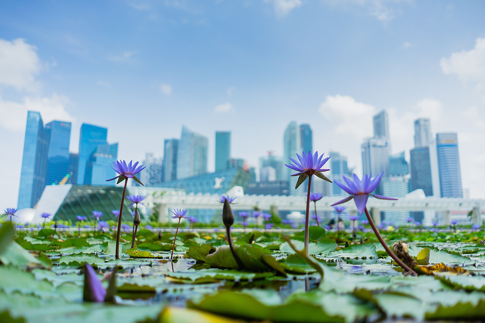 singapore safe haven currency sgd