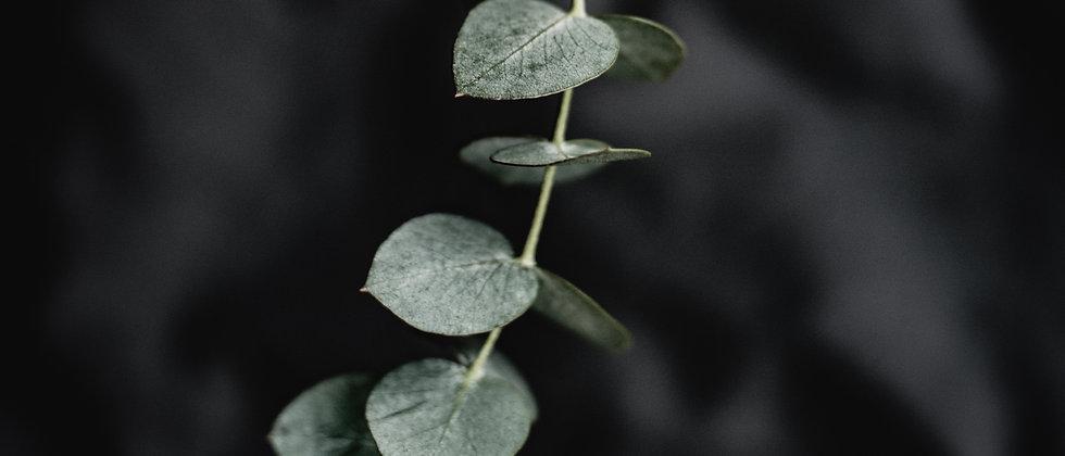 Peppermint + Eucalytpus