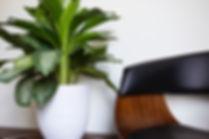 Prendre soin de ses plantes - Un coup de pouce vert avec Le guide Plantzy