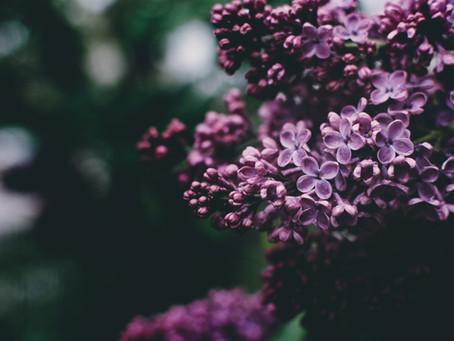 Lilla, lavanda e altre sfumature di viola