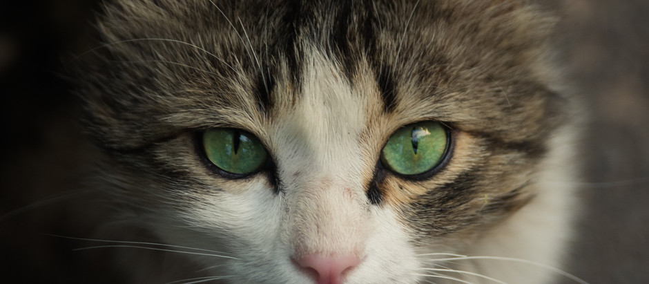 The Vibrational Healing Power of Cats