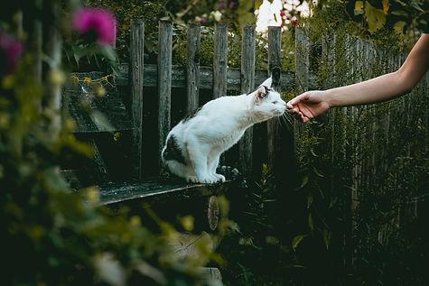 Image by niklas_hamann