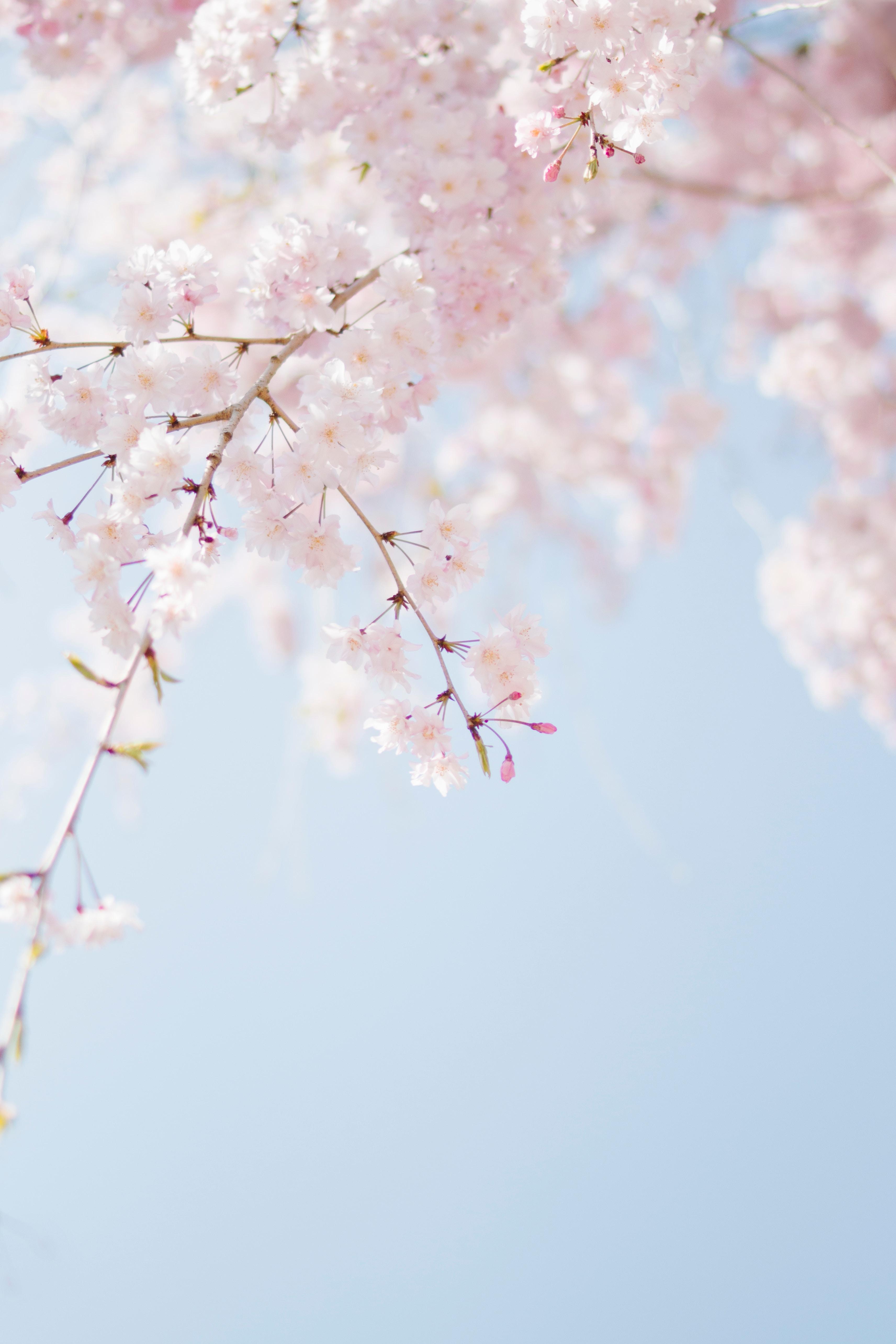 Mar: Hello Spring