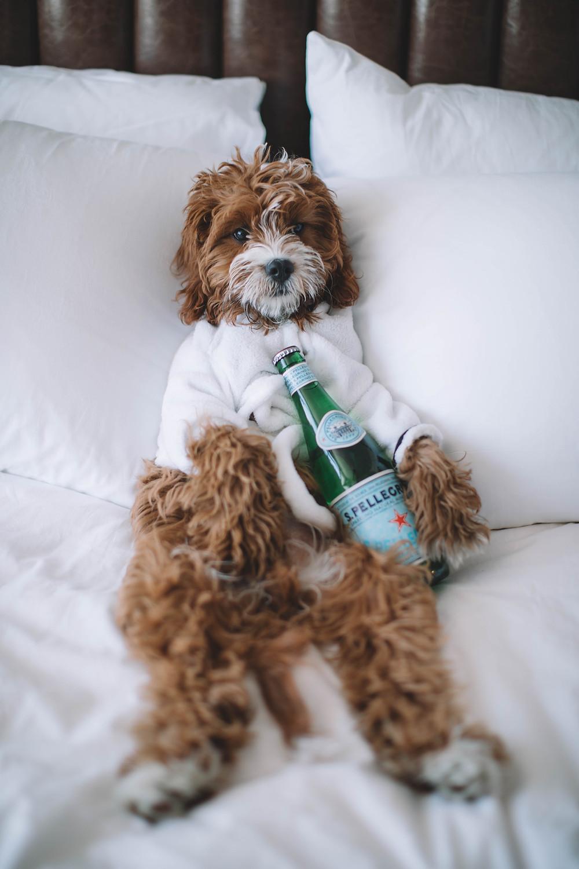 Puppy logeert voor socialisatie