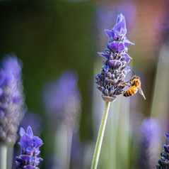 Zaai jij mee voor een betere biodiversiteit?