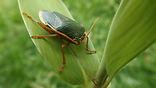 stink bug south Jersey