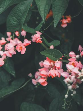 Image by Yuiizaa September