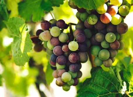 Lebanese Wine Brands