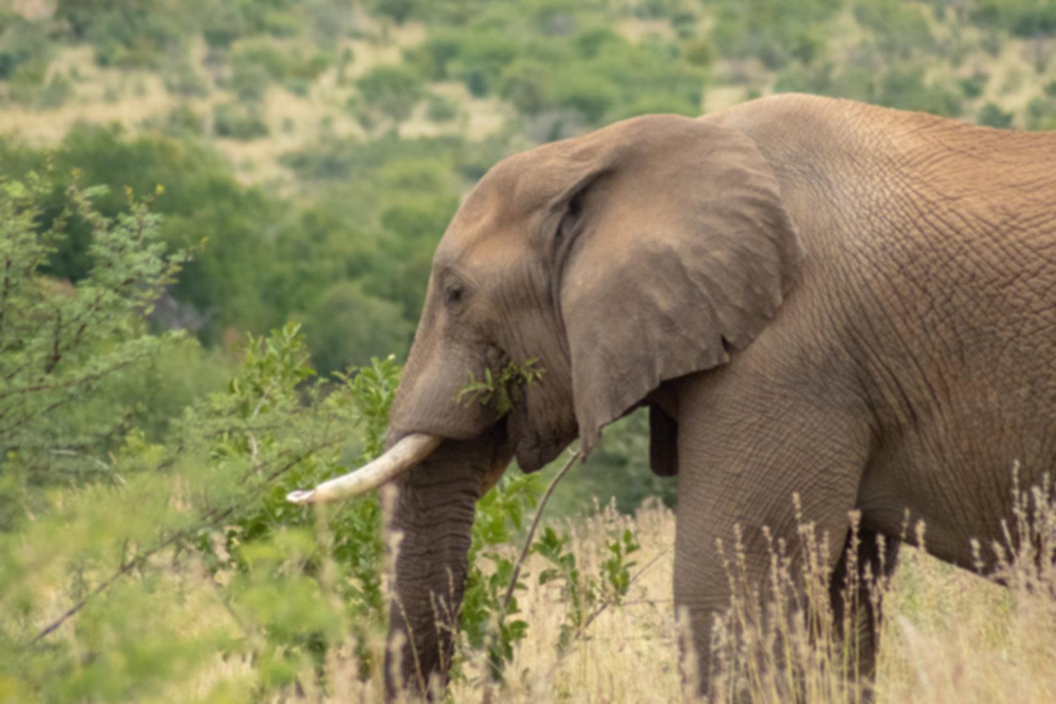 Lugares que ver en Pilanesberg National Park