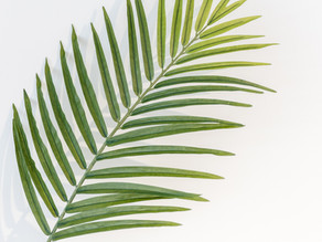 Palm Sunday, Rite II (Sunday, March 28, 2021)