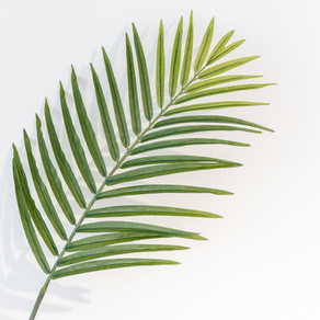 Palm/Passion Sunday Service - in person. March 28th : 9:00 a.m.