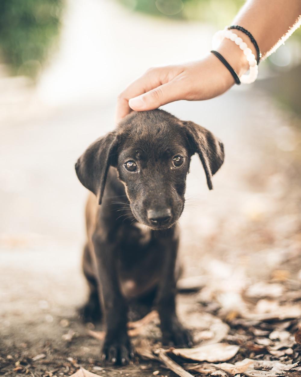 Puppy geruststellen