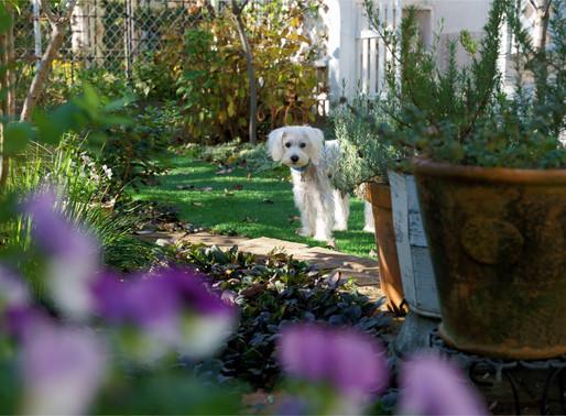 Londres : les cas de chiens kidnappés se multiplient
