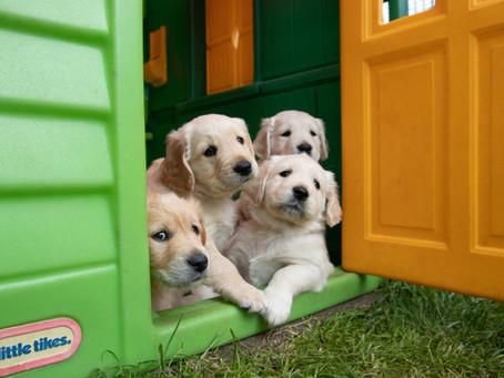 Puppy Developmental Stages