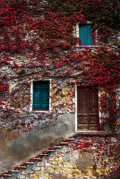 A wall covered in roots and vines