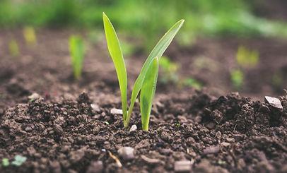 #agricultureinternshipbali