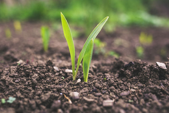 Healthy soil storing carbon | Rize ag