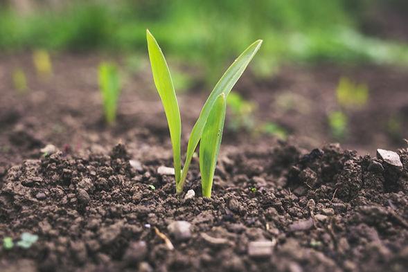 Soil en bonne santé stockant du carbone | CO2 | Rize ag