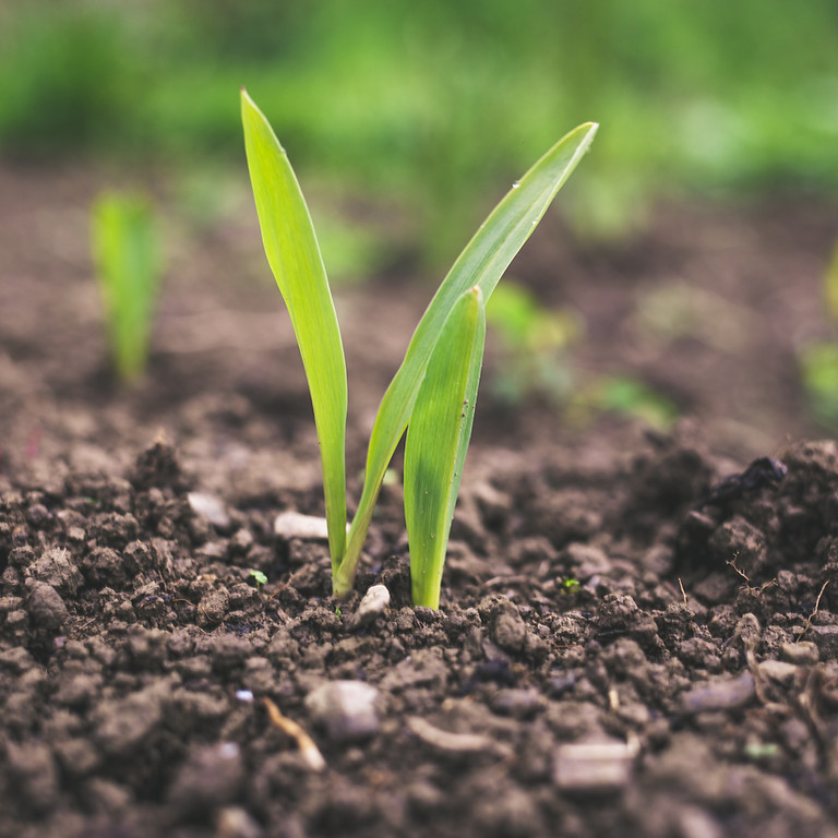 Sustainable Agriculture & Entrepreneurship