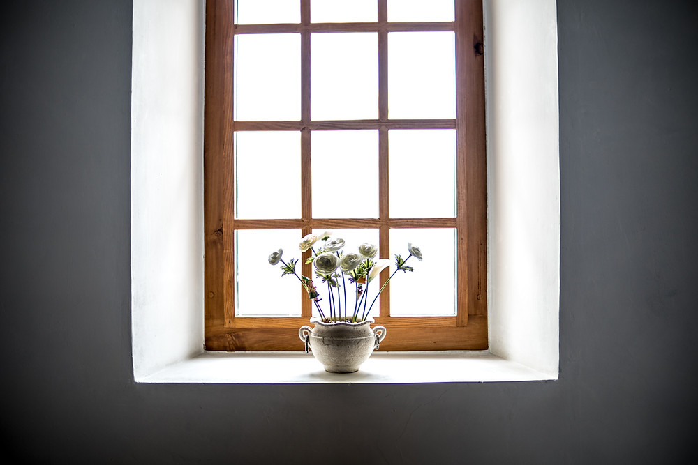 pretty window with plant in front