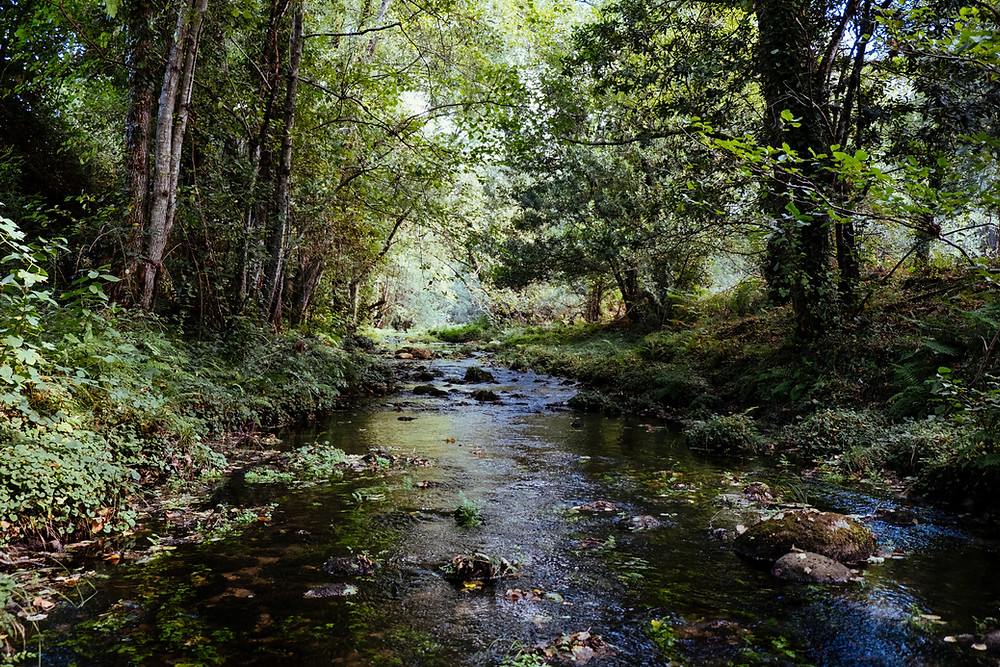 Stream in a forest