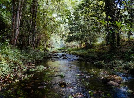 Rock Creek Conservancy