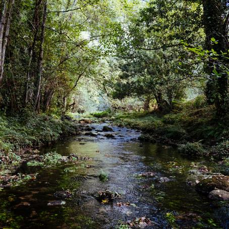 A creek in the bush