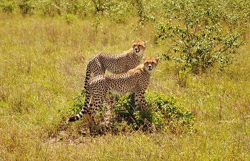 Image by Pop & Zebra