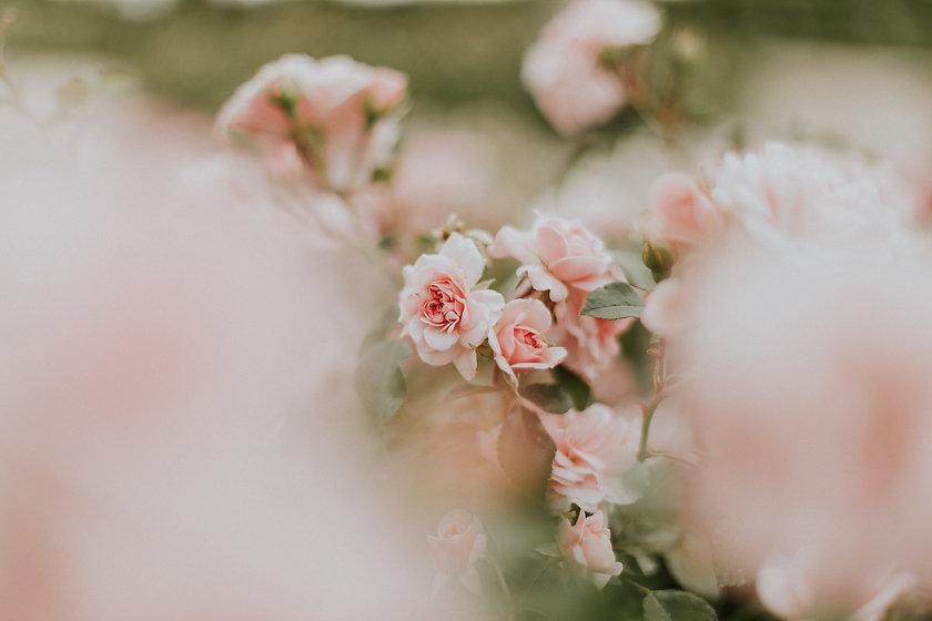 Image de Daiga Ellaby