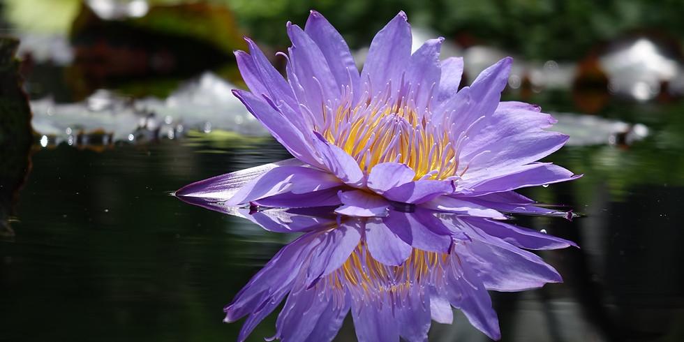 Designing a pond for your garden - Workshop