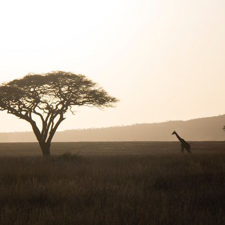 Summer 2021 Tanzania!