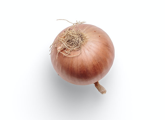 Red Onion 10 lbs