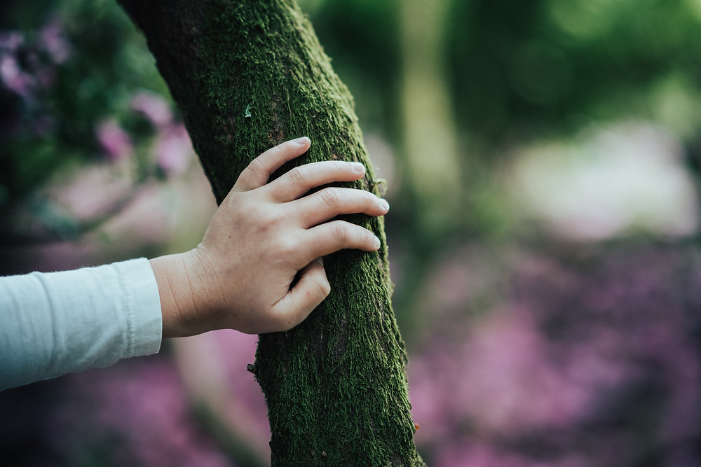 Touching a tree grounding techniques