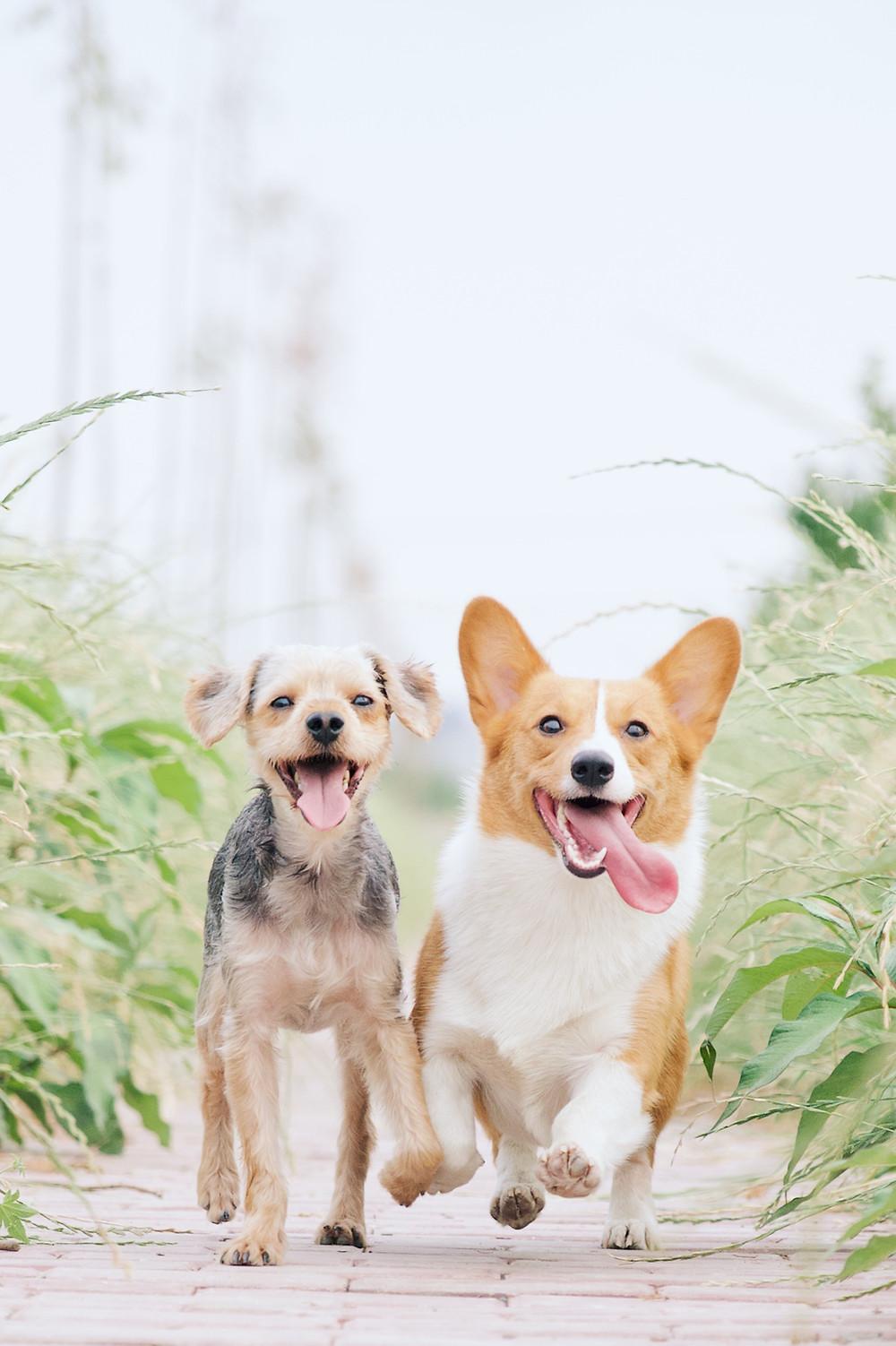 Gelukkige honden