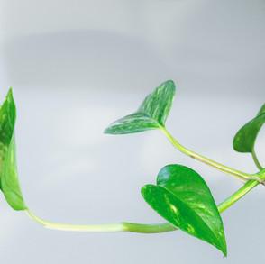 איך נחגוג עם הצמחים שלנו את בוא האביב?