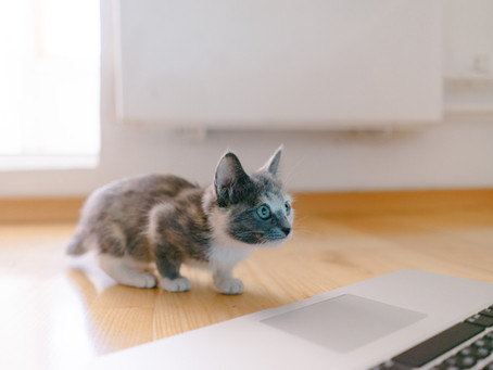 Makanan Untuk Kucing Kecil yang Tepat Untuk Diberikan dan Cara Merawatnya