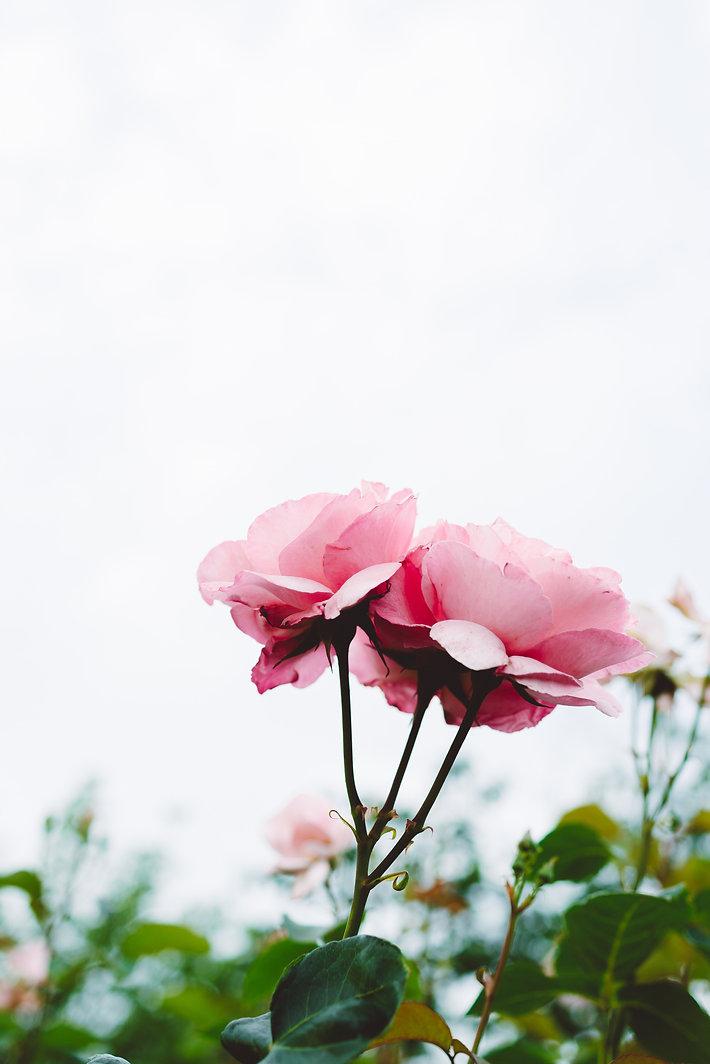 Image de Masaaki Komori
