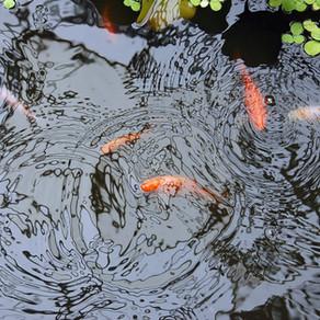 'The Mirror Pond' by Ruth Geldard