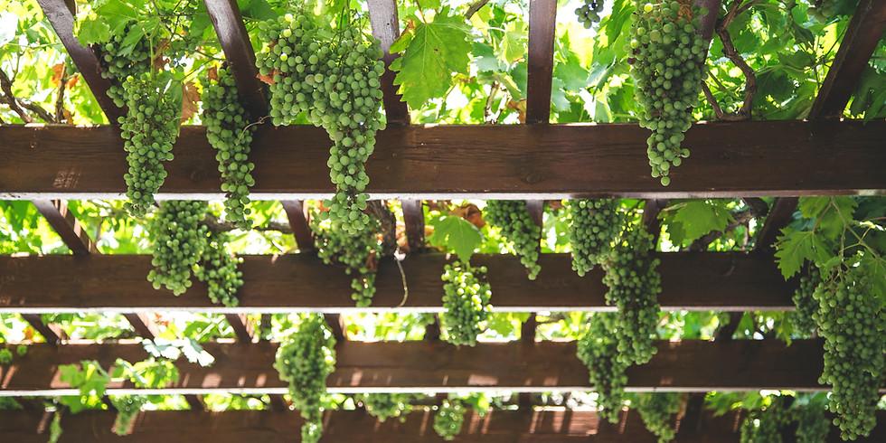 Online Wine Tasting - Greece
