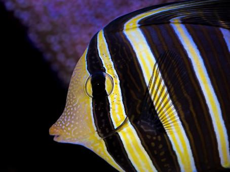 Saltwater Fish 7/17
