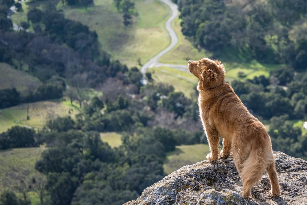 Dog seeking