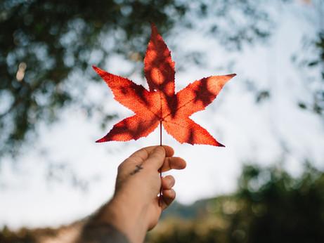 Canadá: um dos lugares mais fáceis de se fazer intercâmbio!