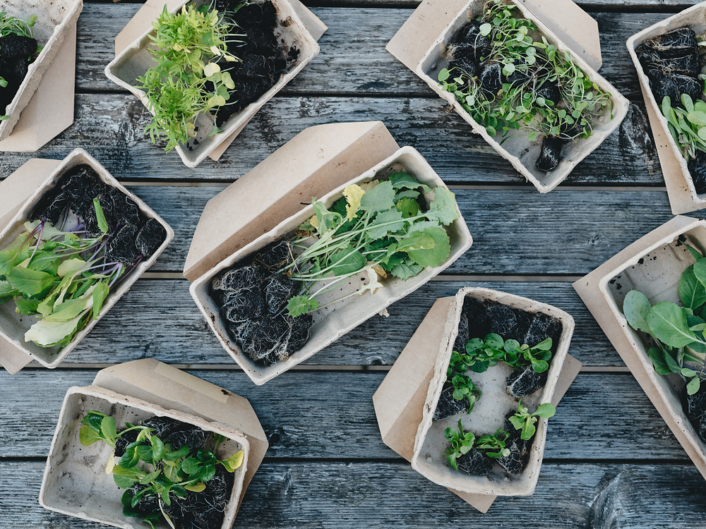 plants on paper containers
