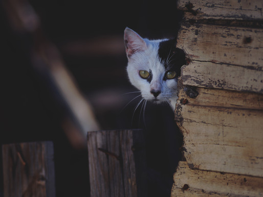 Macabre découverte de chats décapités à Pointe-Claire