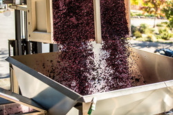 Image by Lasseter Winery