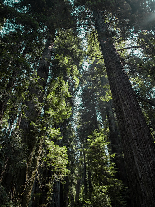 1000 Trees per Month - Offset 200 Tons of Carbon Every Month