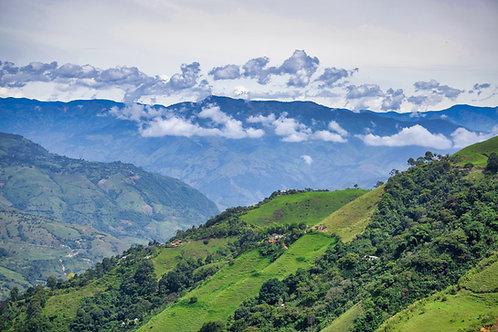 Colombian Finca Primavera RFA